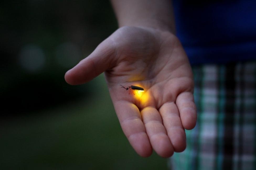 Consejos para atraer luciérnagas - mano