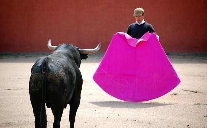 corridas de toro en francia