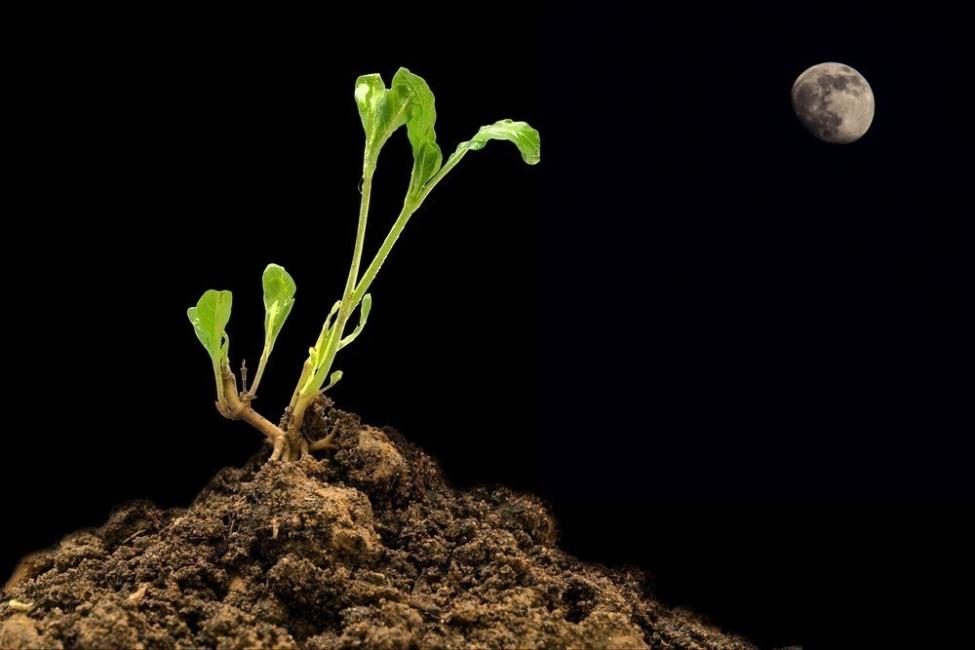 Cómo cultivar teniendo en cuenta las fases lunares