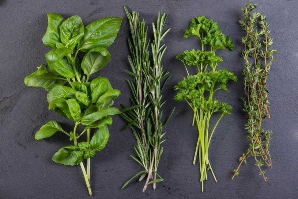formas de conservar tus hierbas- secar con frío