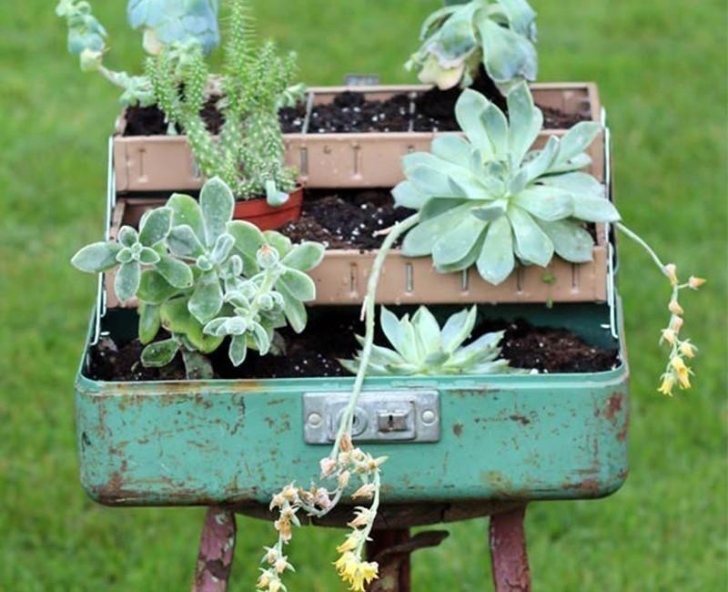 jardín en caja de herramientas - suculentas