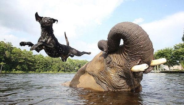 unusual-animal-friendship-3-2